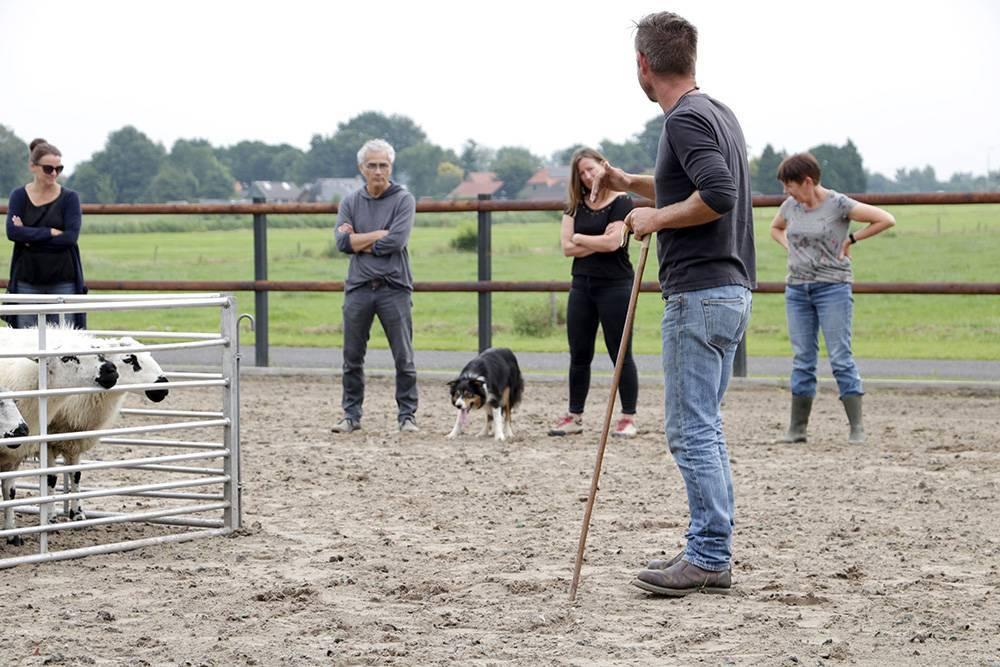 GroeiTeam schapendrijven