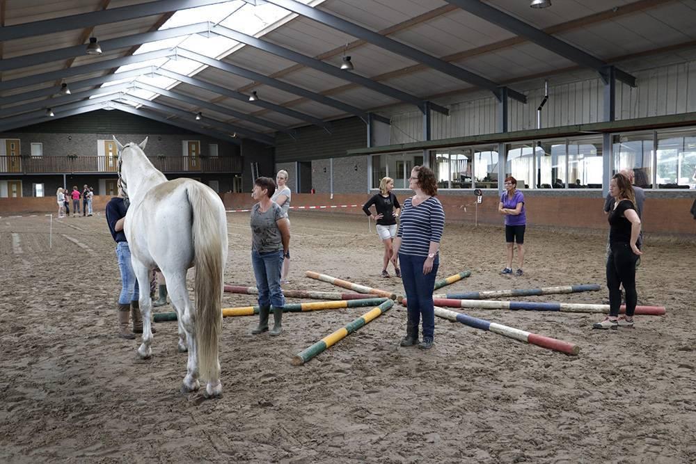 GroeiTeam paardencoaching