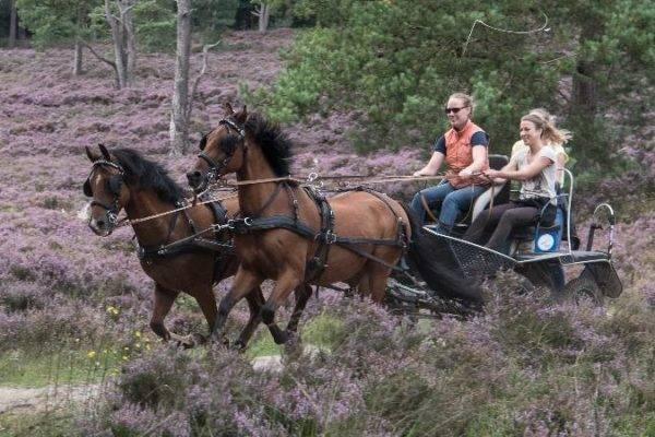 Tijdens het paarden managen samen bezig zijn