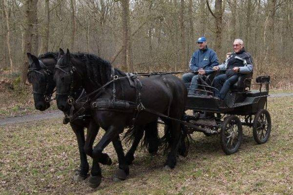 Beter leren communiceren door middel van paarden