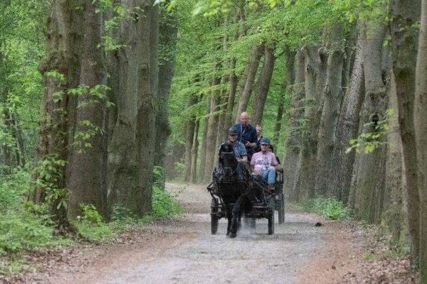 Persoonlijke coaching tijdens rit met paard