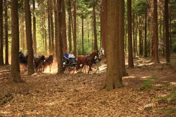 groepsactiviteit rit door het bos op de marathonwagens