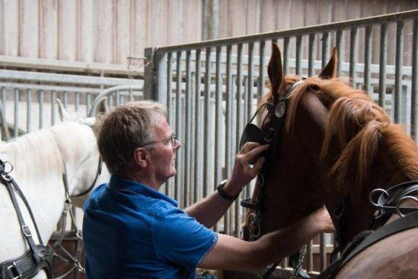 communicatietraining door middel van paarden
