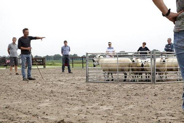 Uitleg over hoe leiding geven te maken heeft met schapendrijven