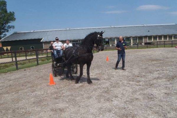Managen van paarden om te kijken hoe je leiding geeft