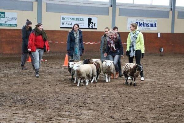 Uitleg aan groep over activiteit schapendrijven